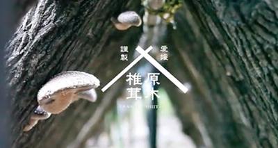 愛媛謹製原木椎茸